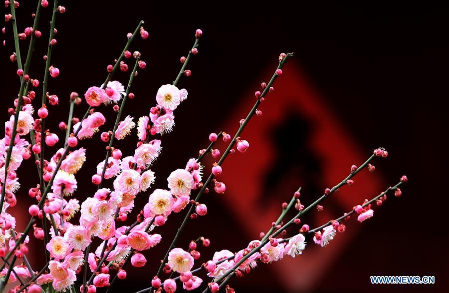 Arbres et plantes en fleurs en chine for Arbres plantes fleurs