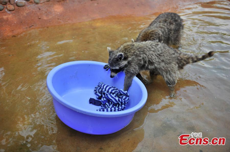 Le jardin zoologique attire les visiteurs avec un for Le jardin zoologique
