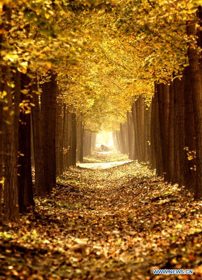 foto de Photos - paysages magnifiques de l'automne à Beijing_French.news.cn