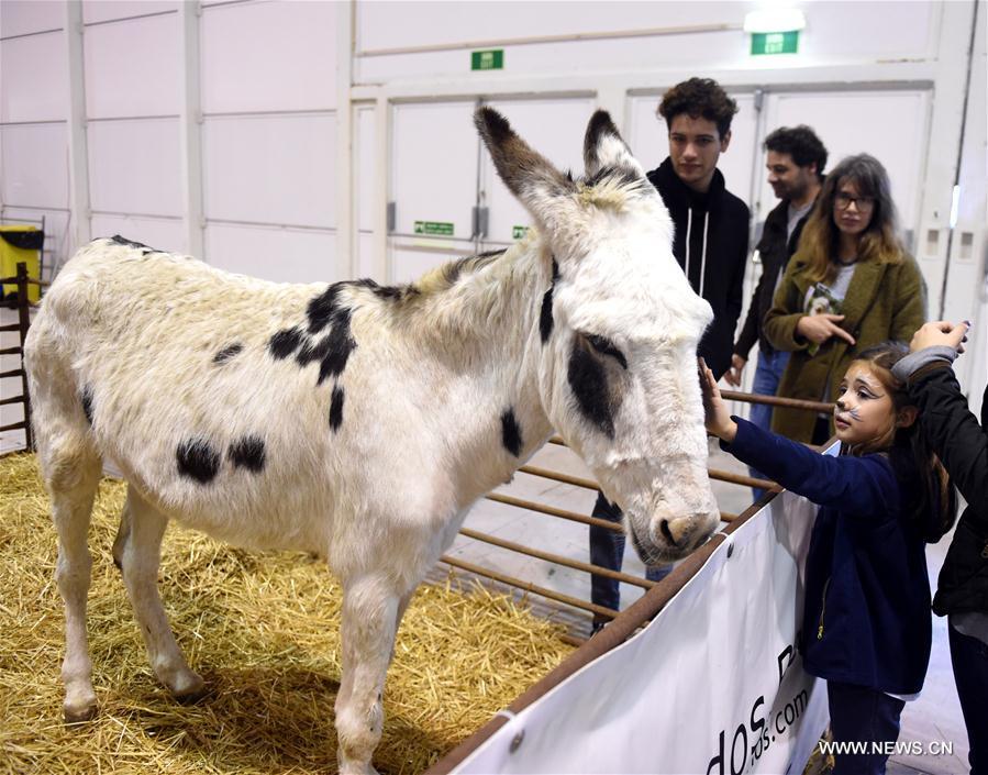 Salon des animaux de compagnie lisbonne for Salon animaux 2017