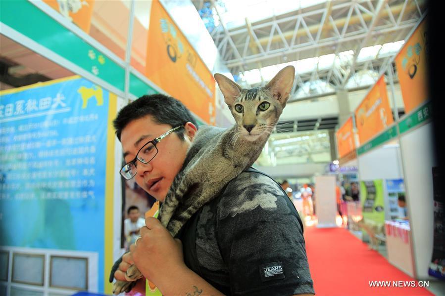 Chine salon des animaux de compagnie au ningxia french for Salon des animaux 2017
