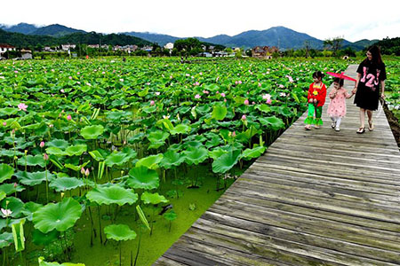 Chine : bassins de lotus à Wuyishan