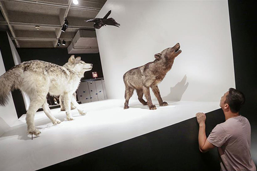 "Canada: l'exposition ""Wild Things"" à Vancouver"