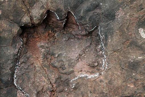 Chine : des empreintes de dinosaures du Jurassique précoce découvertes au Guizhou