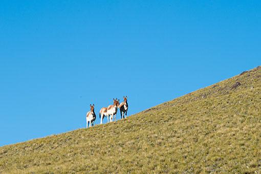 Chine: Paysage du lac Zhari Namco à Ali au Tibet